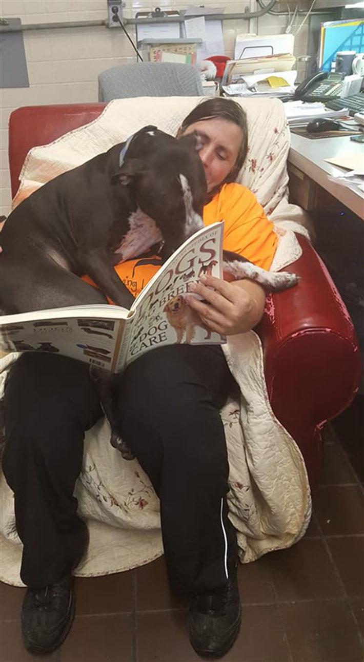 Perro en el refugio