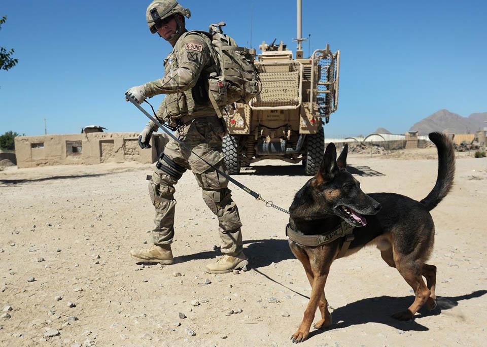Perro en la guerra