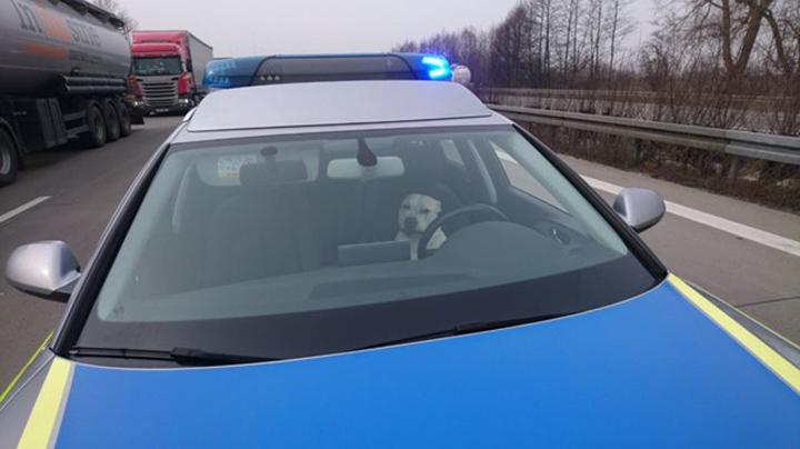 Perro en la patrulla