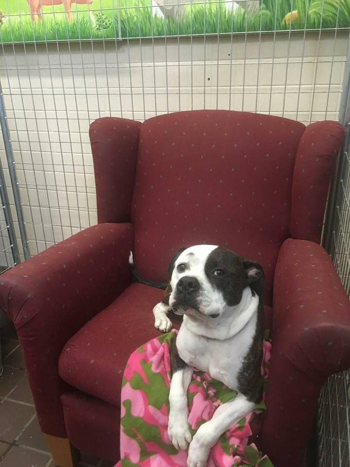 Perro en silla