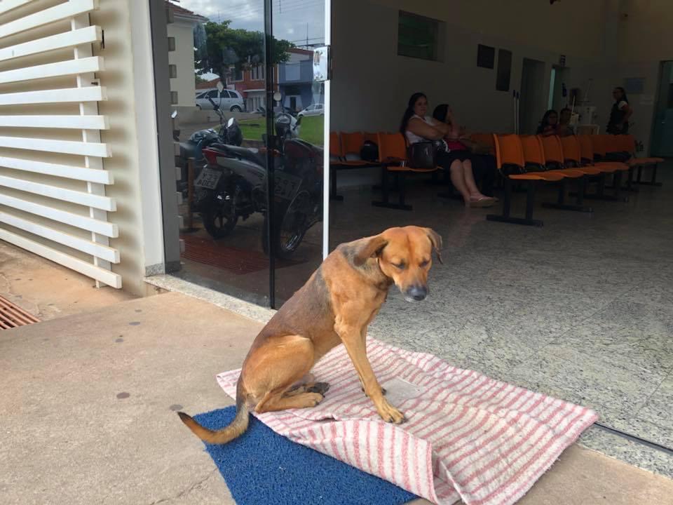 Perro leal en Brasil