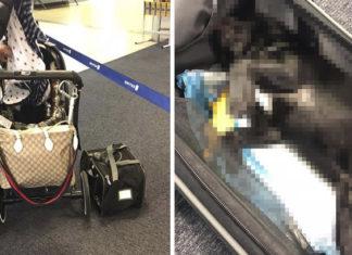Perro muere en vuelo en el portaequipajes