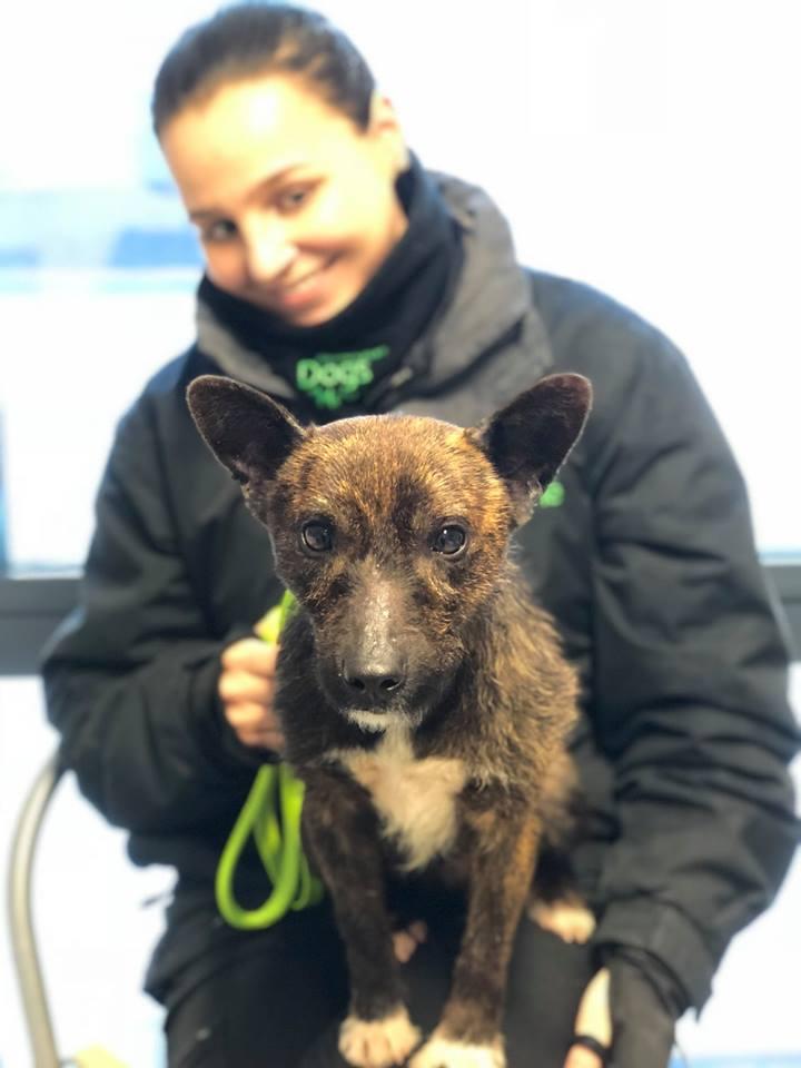 Perro rescatado en Inglaterra