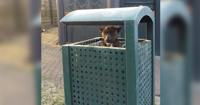 Perro triste vivía en bote de basura