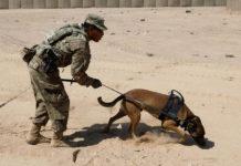 Perros detectores de explosivos abandonados en perreras