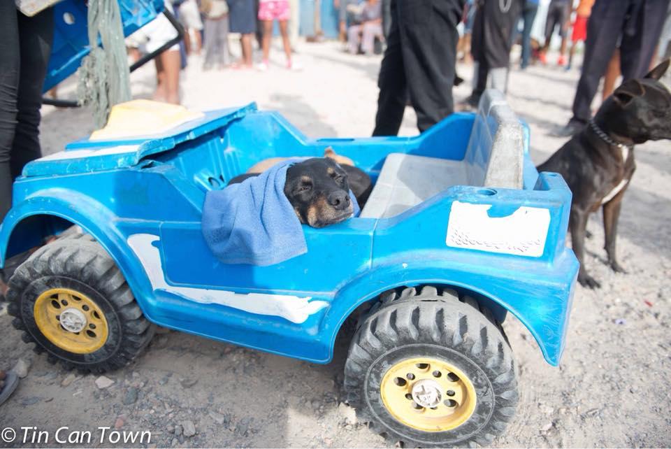 Perros en Jeep