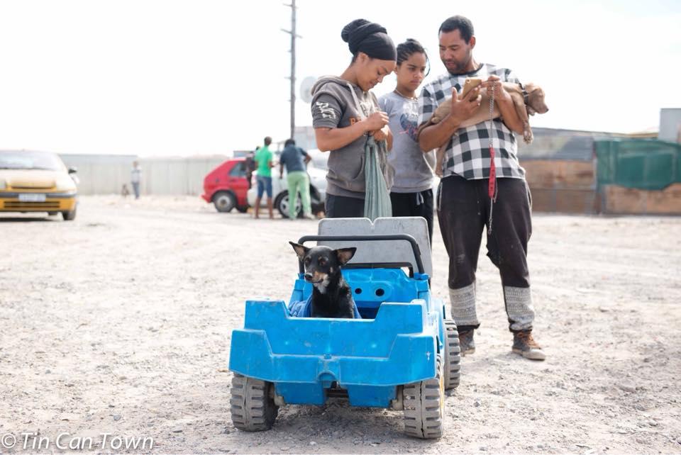Perros en auto de juguete