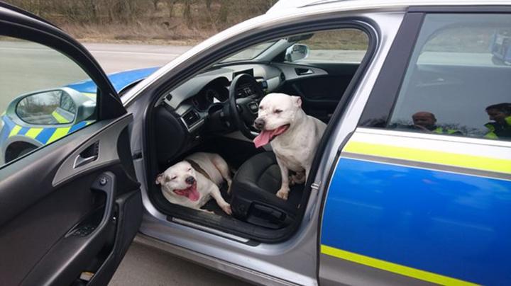 Perros en patrulla