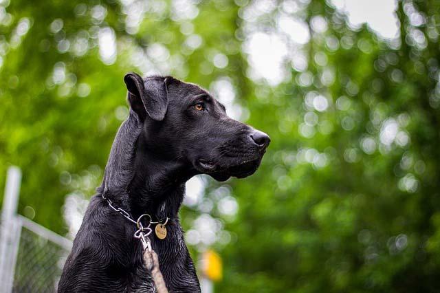 Los perros ven mejor en la oscuridad que los humanos