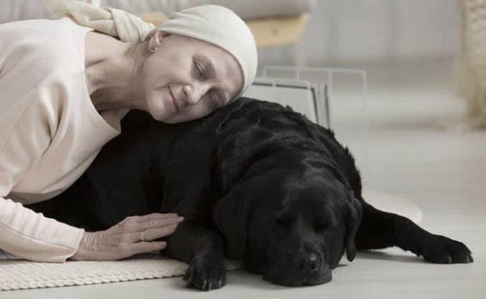 Programa de hospicio ayuda pacientes y mascotas