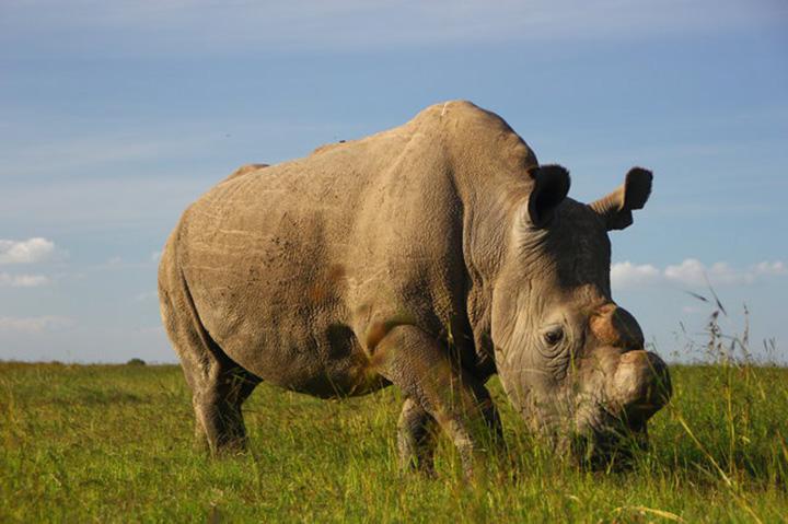 Rinoceronte en santuario