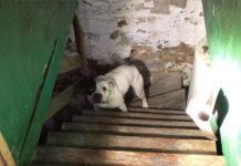 Se muda a una nueva casa y encuentra perro encadenado en el sótano