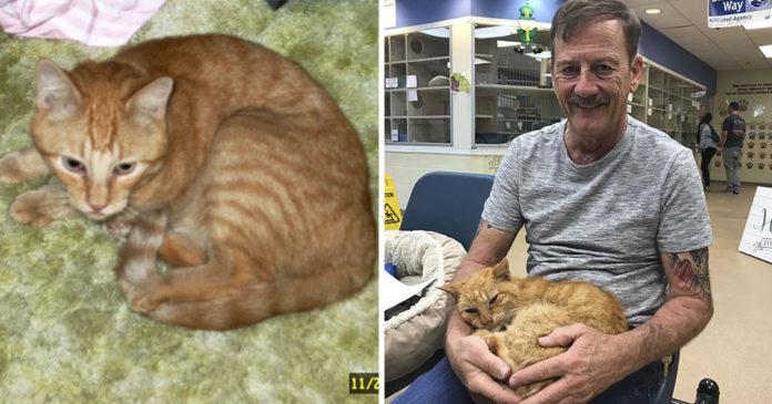 Se reúne con su gato perdido por 14 años