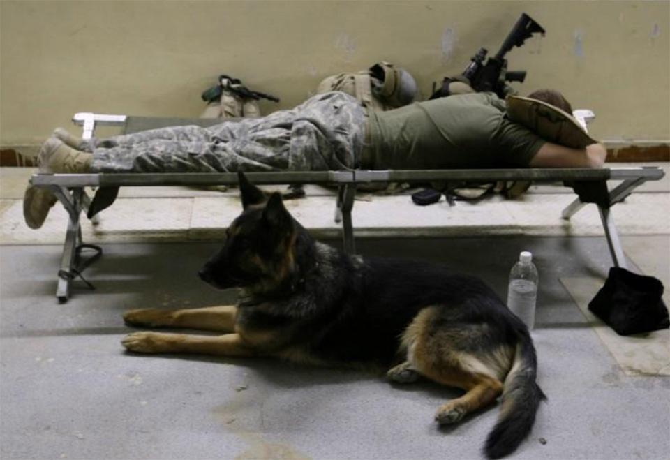 Soldado y perro