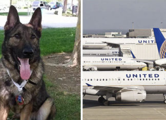 United Airlines envía a un perro por error a Japon