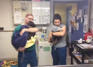Veterinarios acunan perros para consolarlos
