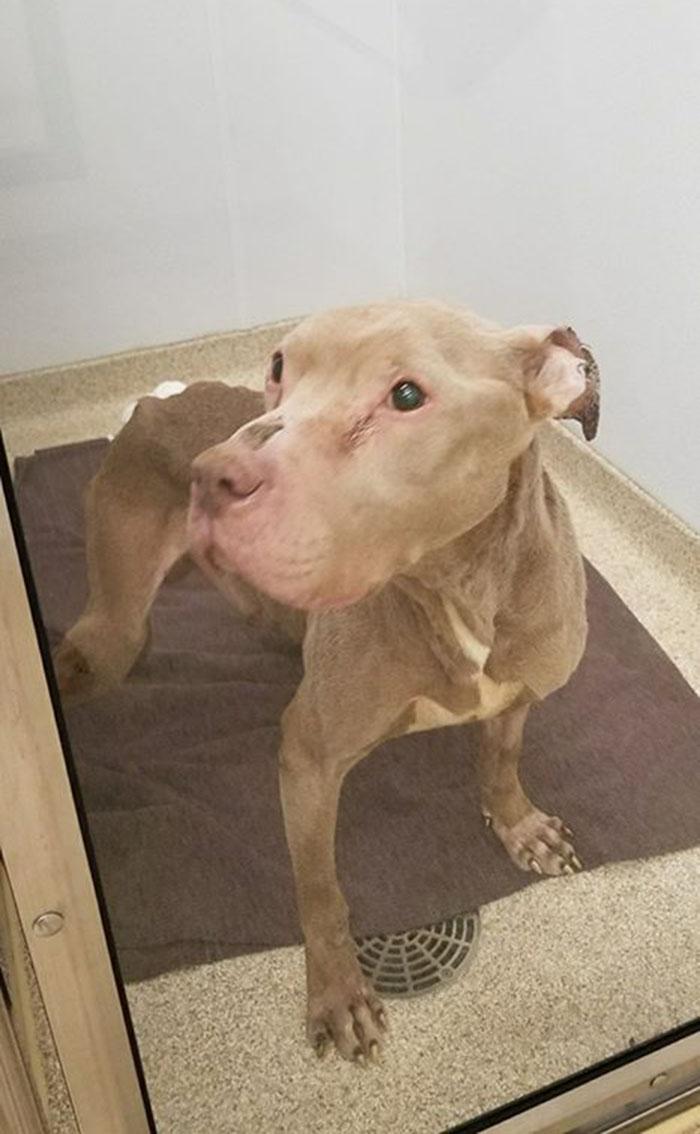 Watson en el veterinario