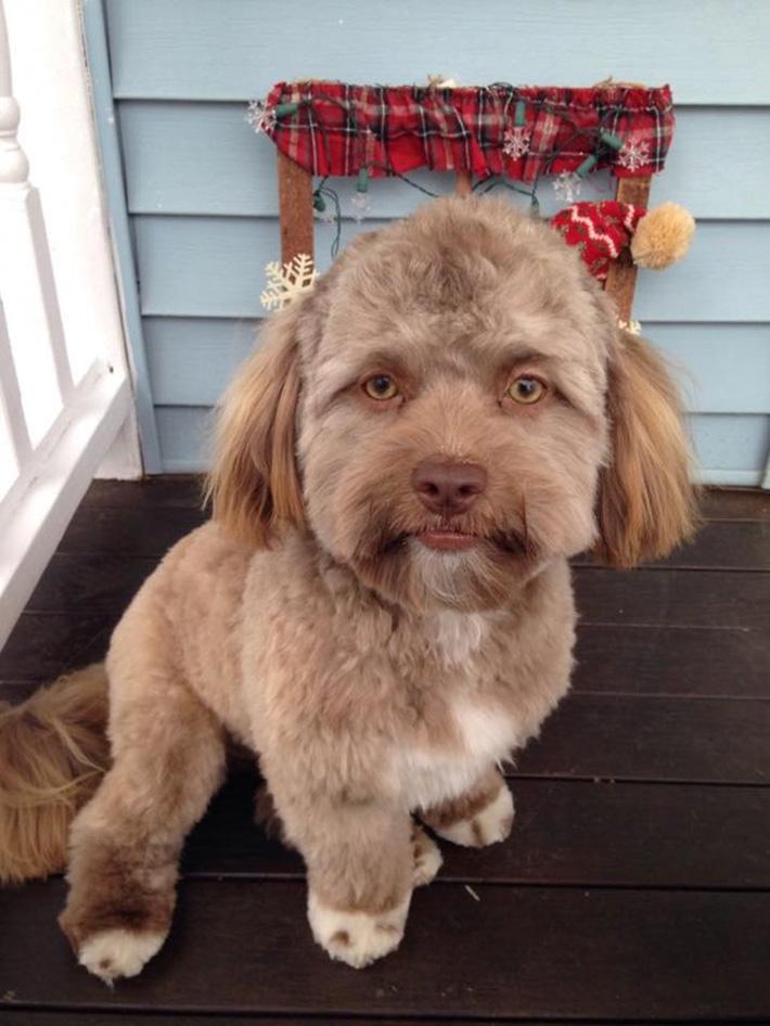 Yogi perro humano