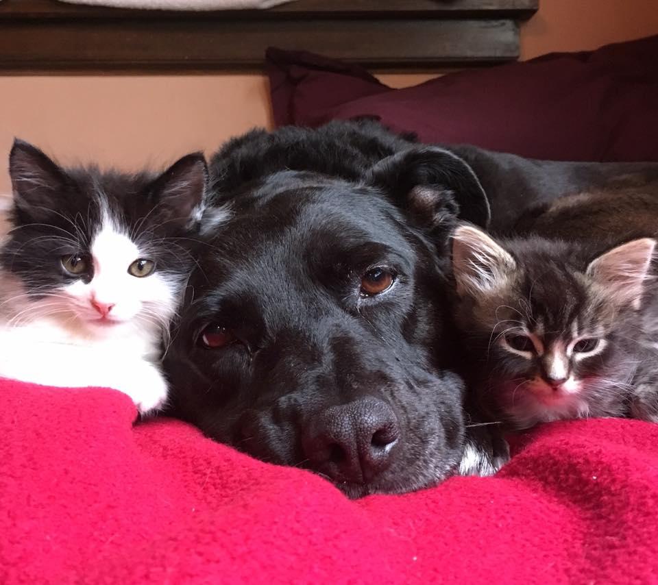 Zuca y sus gatos