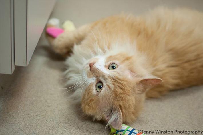 El gato Toby