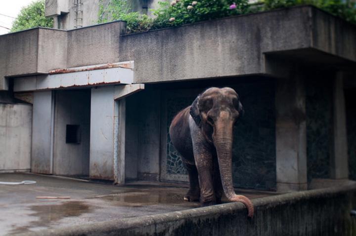 Elefante solitario