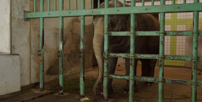 Elefantes encerrados en celdas