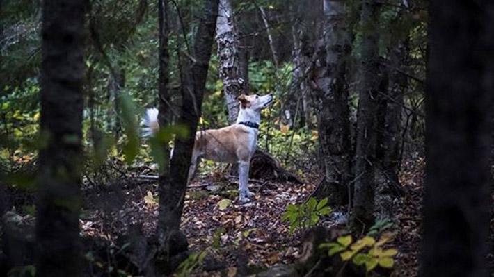 Finn en el bosque