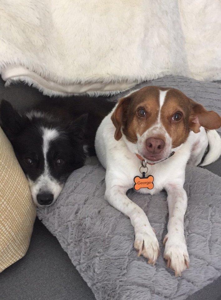 Jack y George
