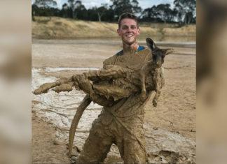 Jóvenes salvan a un canguro asustado en el lodo