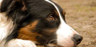 La enfermedad de lyme en perros