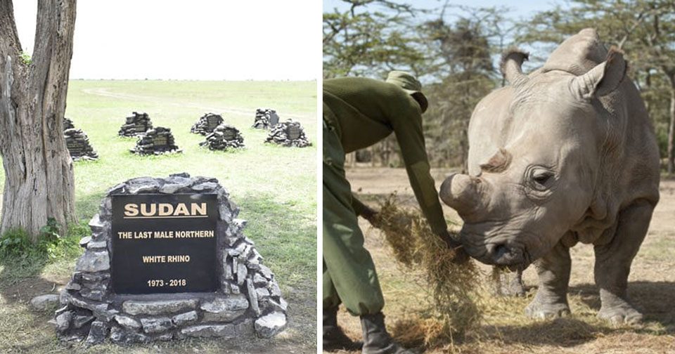 Monumento a Sudán, el último rinoceronte blanco del norte
