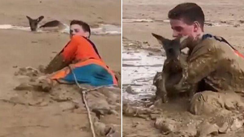 Nick salvando al canguro