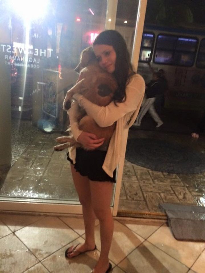 Perrito sin hogar