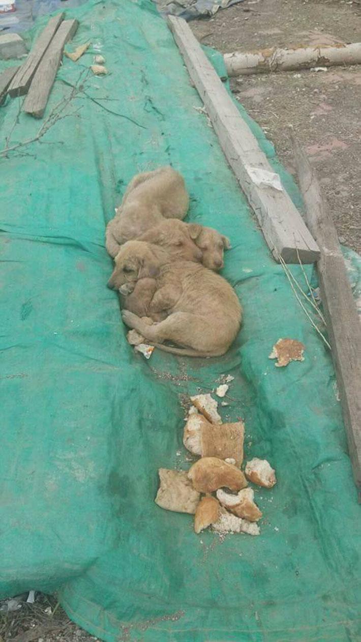 Perritos abandonados juntos
