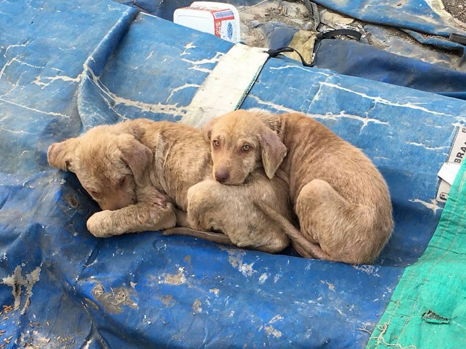 Perritos abrazados