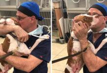 Perro con graves quemaduras se reúne con el veterinario que lo salvó