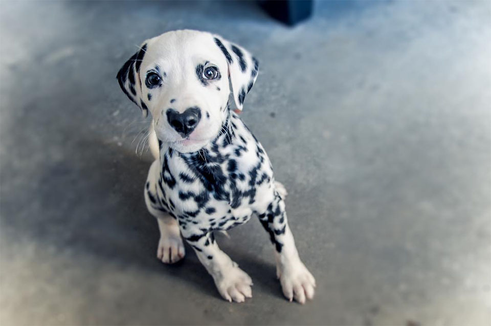 Perro con nariz de corazón