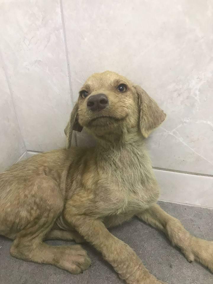 Perro en Turquía