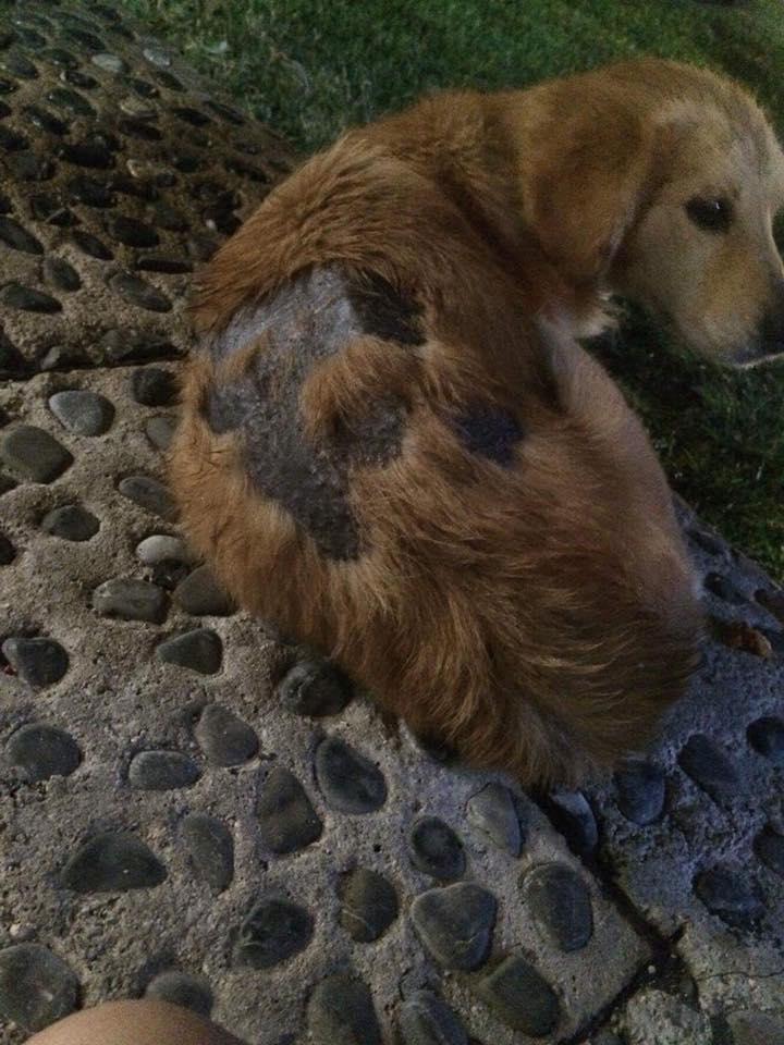 Perro en calle de Cancún