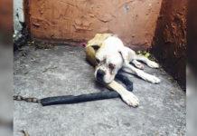 Perro encadenado fuera de casa desde que fallece el dueño