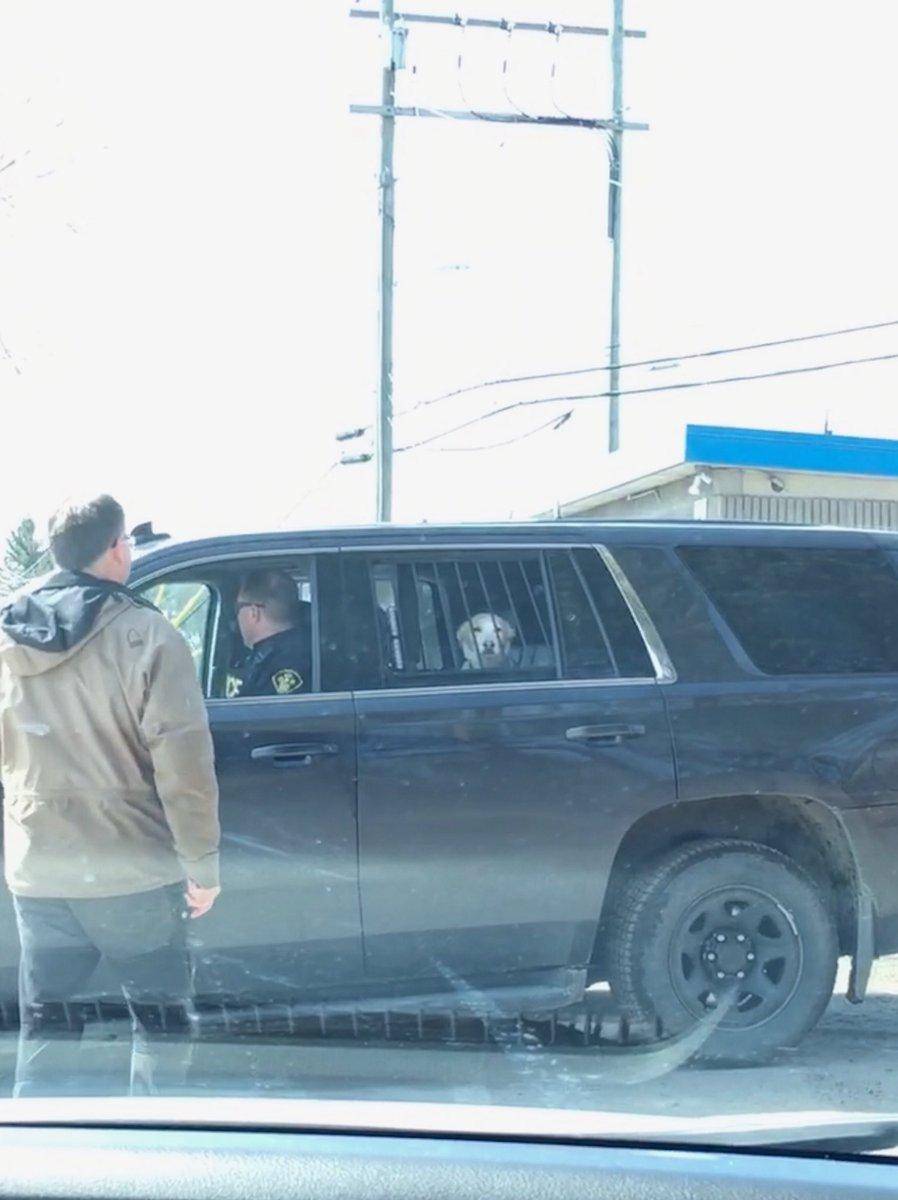 Perro es arrestado