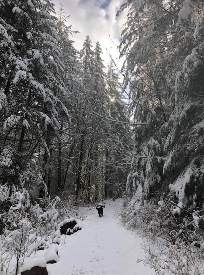 Perro espera en la nieve