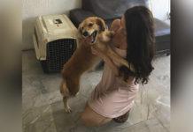 Perro está emocionado de ver a la familia que lo salvó