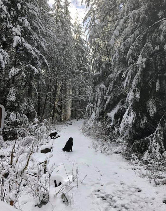 Perro excursionista