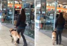 Perro guía a su mamá a la tienda de mascotas