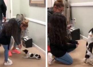 Perro se reúne con la familia que perdió en el huracán maría