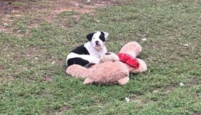 Perro sin hogar junto a su oso de peluche