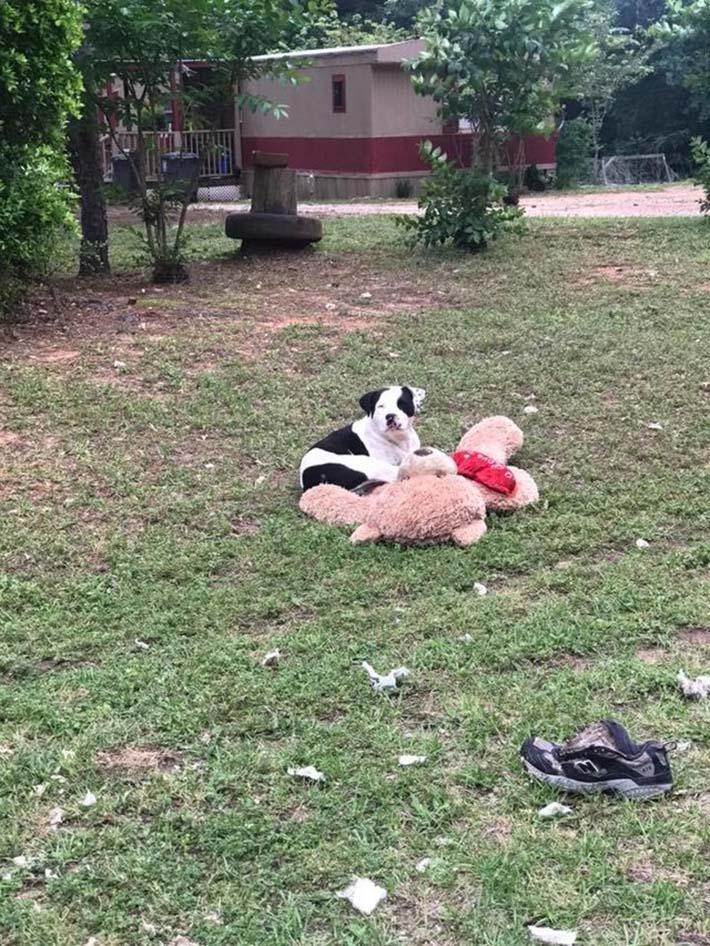 Teddy y su oso de peluche
