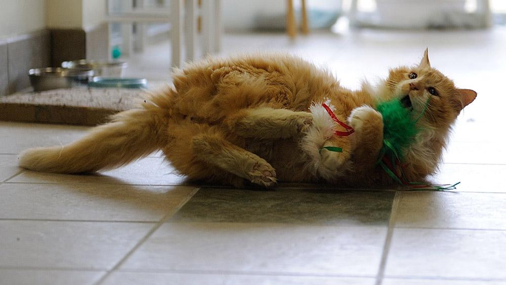 Toby jugando