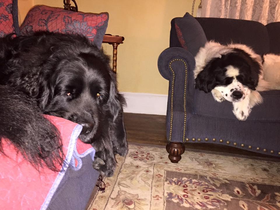 Bella y su hermano